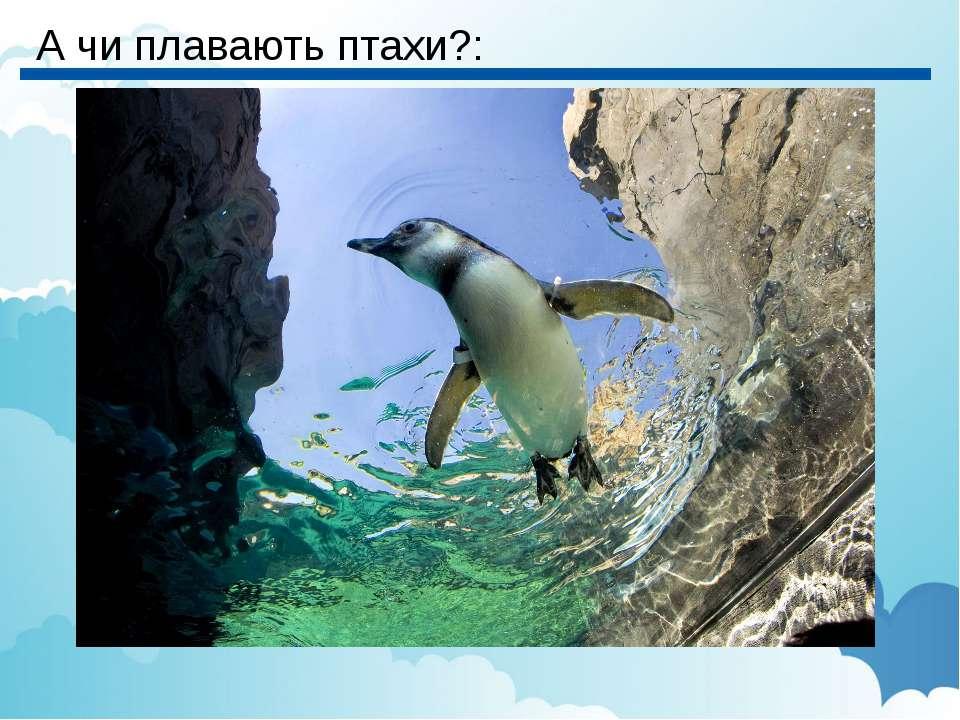 А чи плавають птахи?: