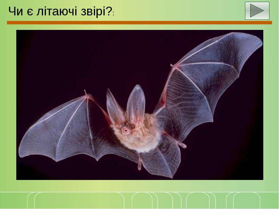 Чи є літаючі звірі?