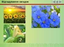 Відгадування загадок Квітка ця на сонце схожа, На олію вона гожа, Жовті пелюс...