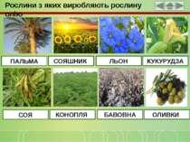 Рослини з яких виробляють рослину олію ПАЛЬМА СОЯШНИК ЛЬОН КУКУРУДЗА СОЯ КОНО...