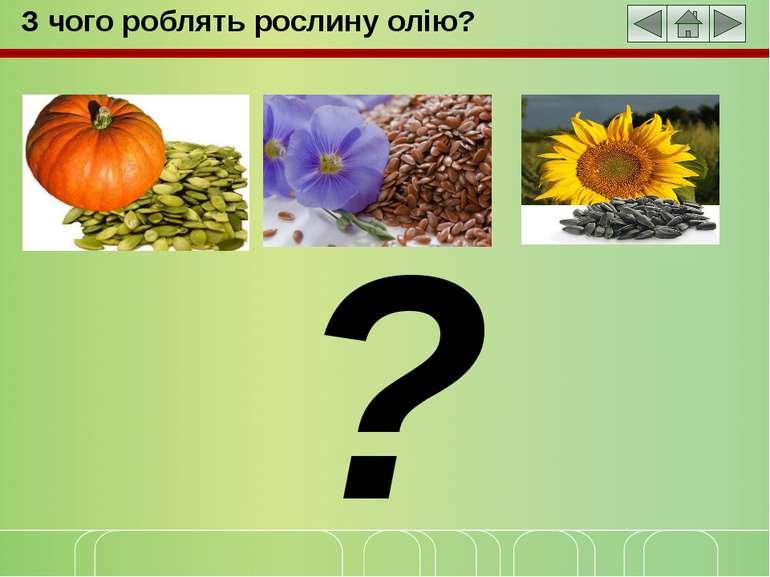 З чого роблять рослину олію? ?
