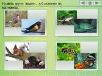 Назвіть групи тварин , зображених на малюнках.