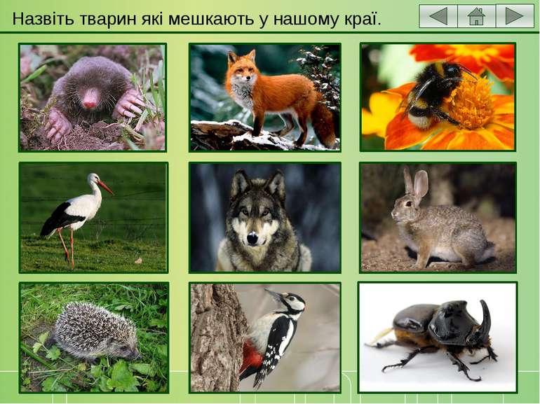 Назвіть тварин які мешкають у нашому краї.