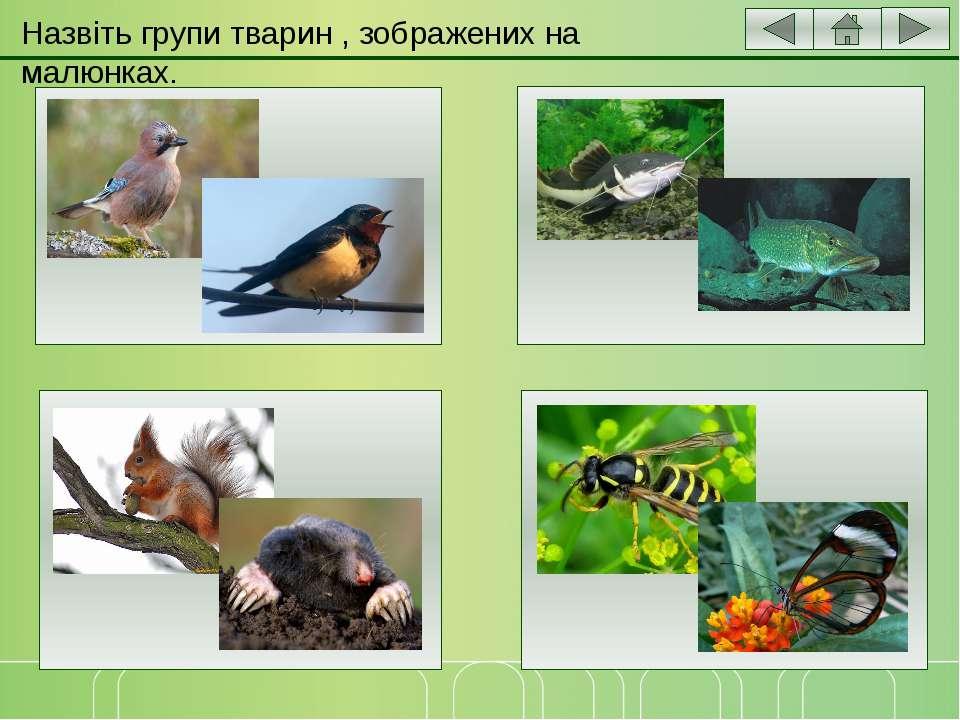 Групи тварин зображених на малюнках