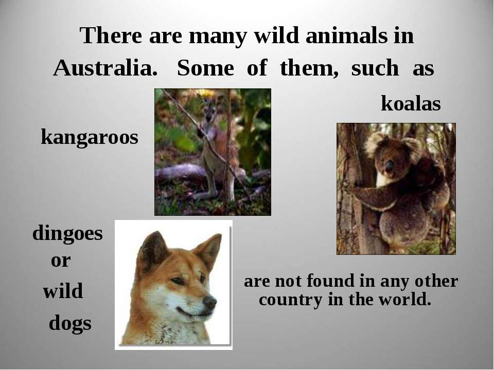 There are many wild animals in Australia. Some of them, such as kangaroos koa...