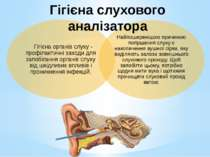 Гігієна слухового аналізатора