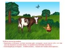 Побігла курочка до корівки: - Корівонько-голубонько, хутчіше молочка дай, гос...