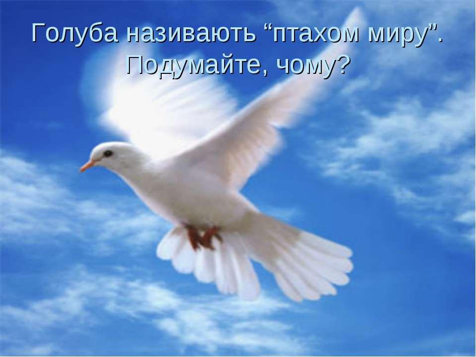 "Голуба називають ""птахом миру"". Подумайте, чому?"