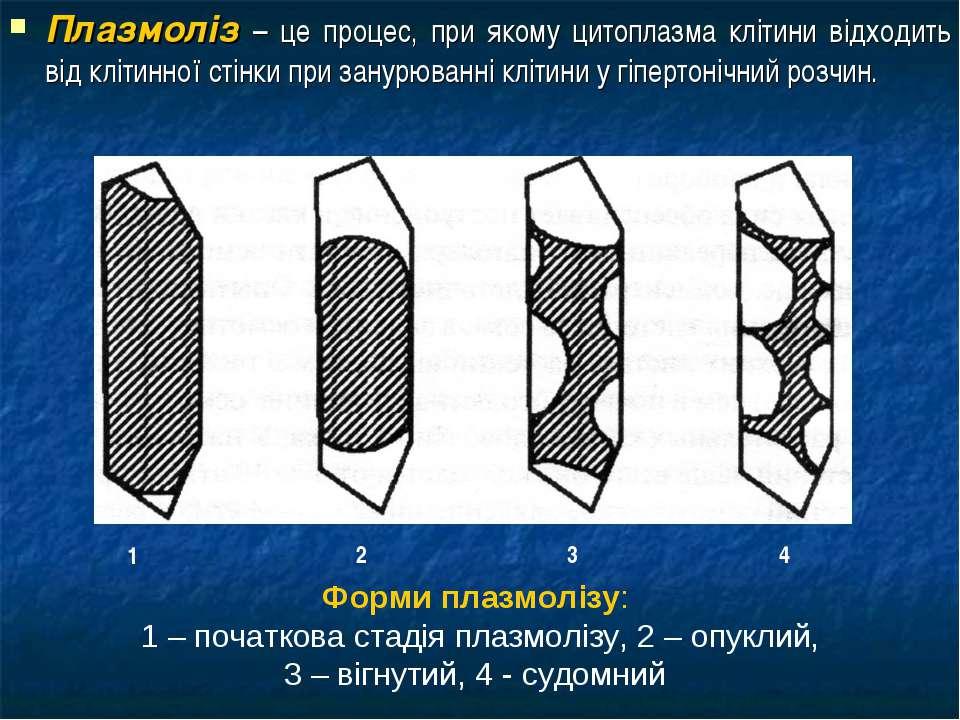 Плазмоліз – це процес, при якому цитоплазма клітини відходить від клітинної с...
