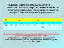 Молекули класів Головного комплексу гістосумісності розпізнаються Т клітинним...