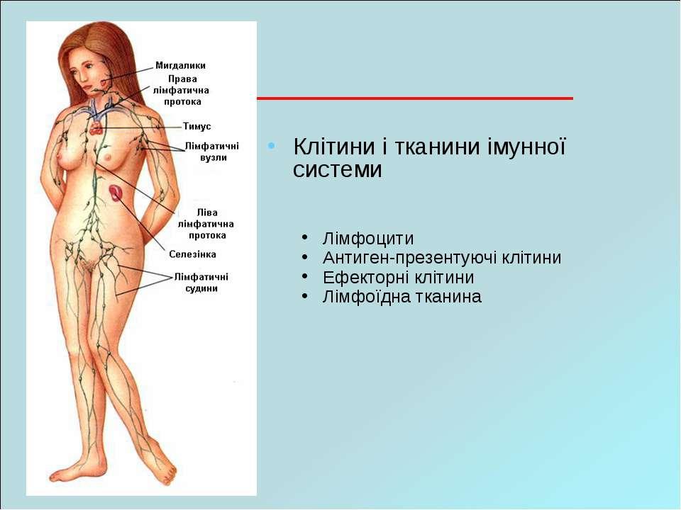 Клітини і тканини імунної системи Лімфоцити Антиген-презентуючі клітини Ефект...