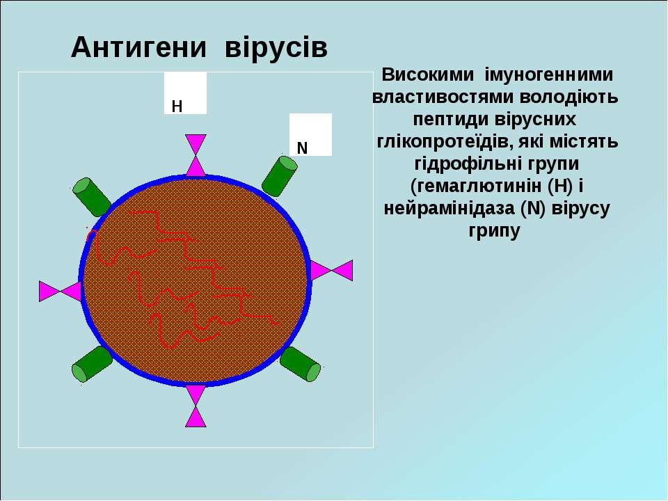 Антигени вірусів Високими імуногенними властивостями володіють пептиди вірусн...