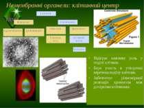 Немембранні органели: клітинний центр Відіграє важливу роль у поділі клітини....