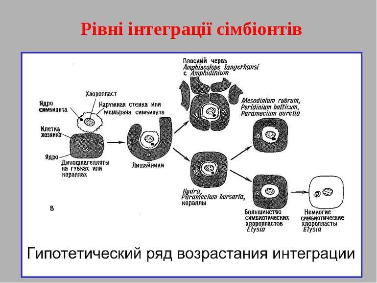 Рівні інтеграції сімбіонтів