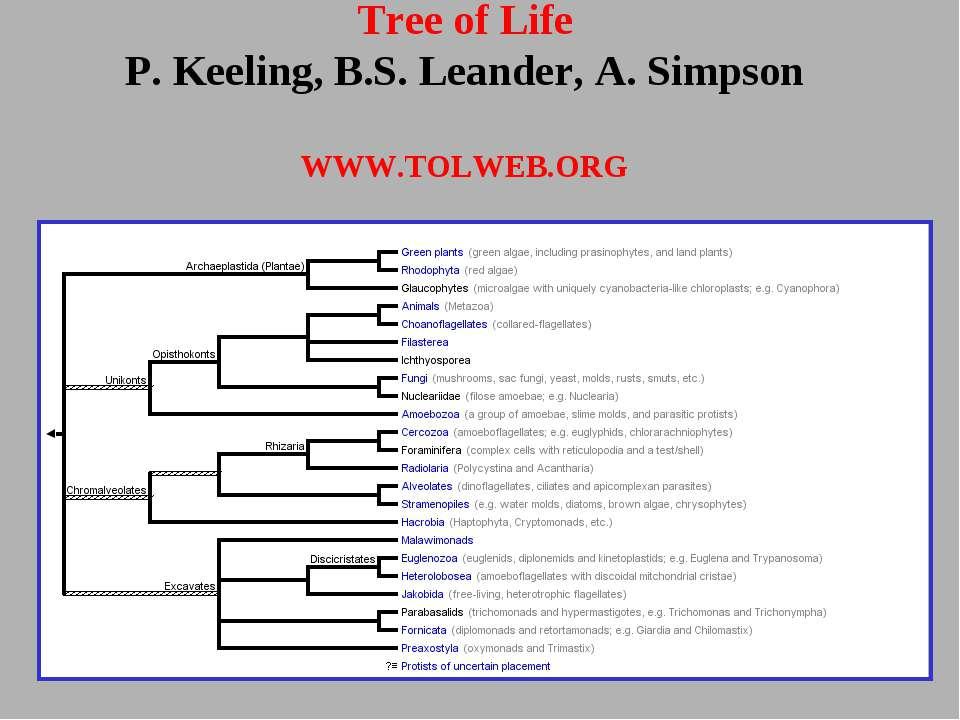 Tree of Life P. Keeling, B.S. Leander, A. Simpson WWW.TOLWEB.ORG