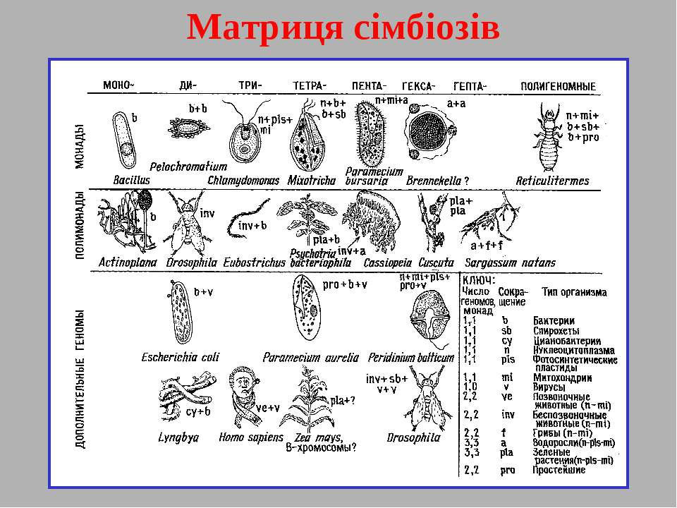 Матриця сімбіозів