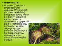 Липкі пастки Росички (Drosera i Drosopbyllum), жирянки (Pinguicula) і росолис...