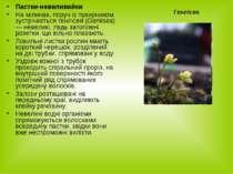 Пастки-невиливайки На мілинах, поруч із пухирником зустрічається генлісея (Ge...