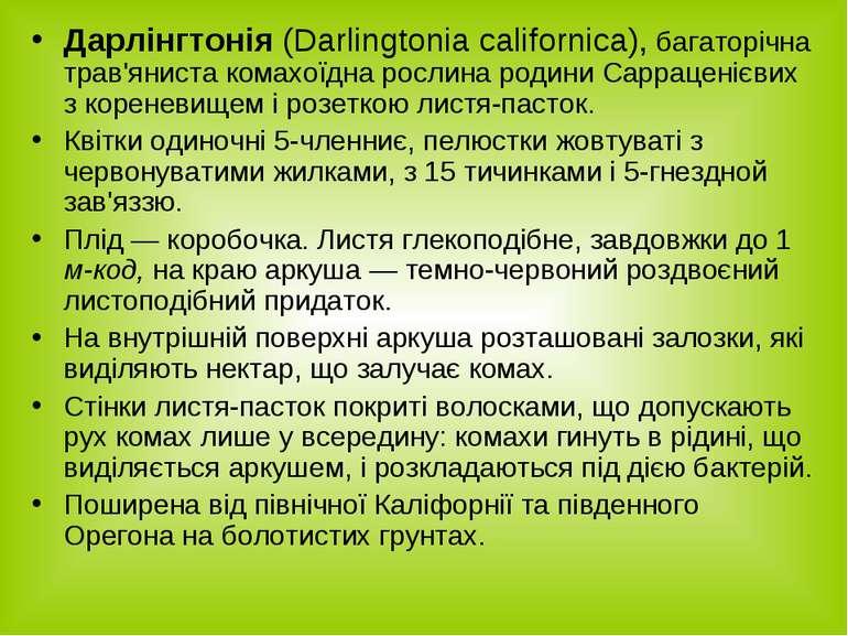 Дарлінгтонія (Darlingtonia californica), багаторічна трав'яниста комахоїдна р...