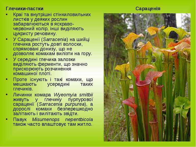 Глечики-пастки Краї та внутрішні cтінкиловильних листків у деяких рослин заба...