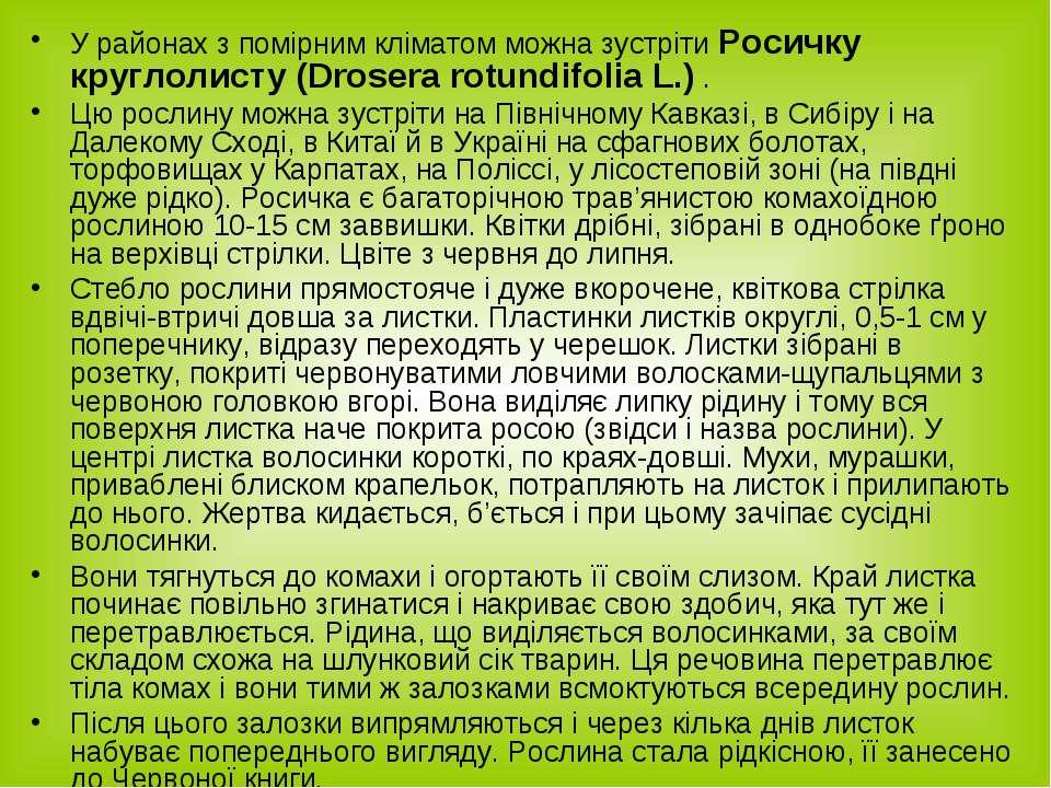 У районах з помірним кліматом можна зустріти Росичку круглолисту (Drosera rot...