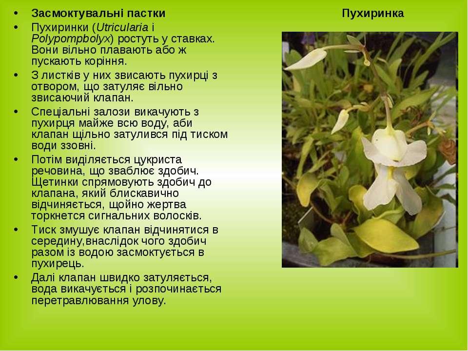 Засмоктувальні пастки Пухиринки (Utricularia i Polypompbolyx) ростуть у ставк...