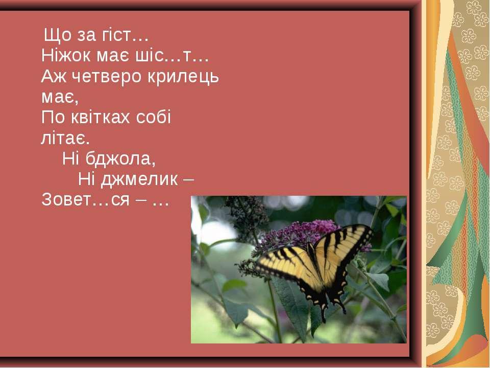 Що за гіст… Ніжок має шіс…т… Аж четверо крилець має, По квітках собі літає. Н...