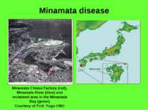 Minamata disease Minamata Chisso Factory (red), Minamata River (blue) and rec...