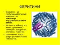 ФЕРИТИНИ Феритин – це глобулярний білковий комплекс, що накопичує внутрішньок...
