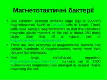 Магнетотактичні бактерії One reported example includes large (up to 200 nm) m...