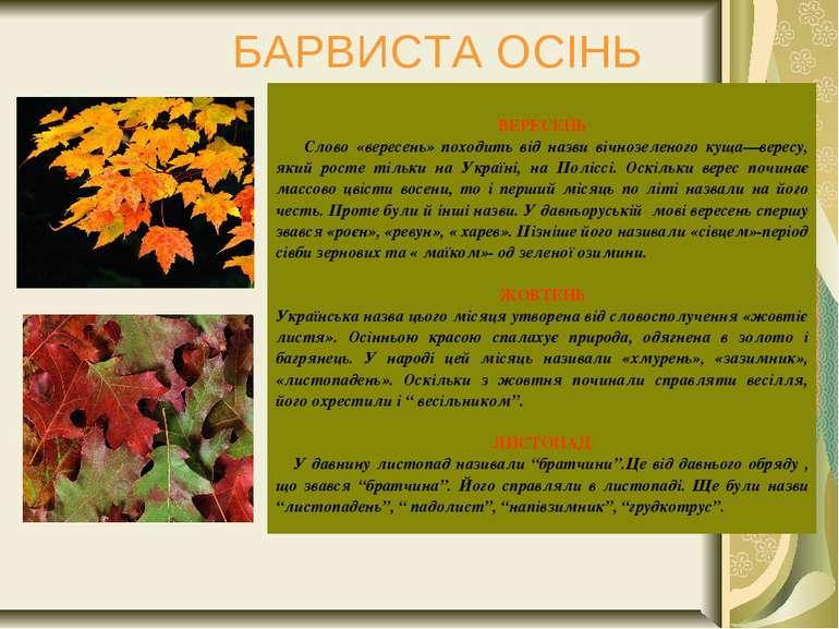 БАРВИСТА ОСІНЬ  ВЕРЕСЕНЬ Слово «вересень» походить від назви вічнозеленого к...