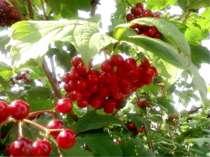 Завдання 4 (зошит, с. 16). Творча робота. Які ягоди? Соковиті круглі плоди, р...