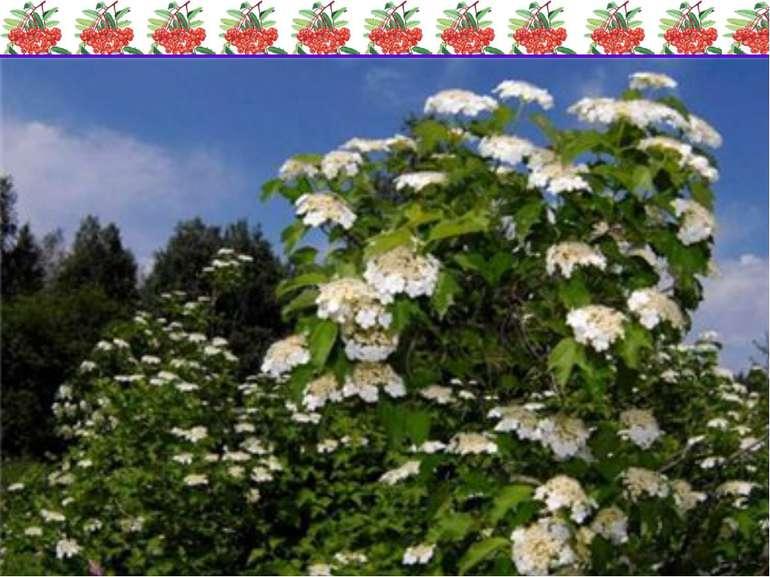 Виступ учнів-ботаніків Цікаво, що великі квіти не дають плодів, а з маленьких...
