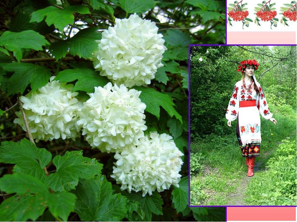 Текст-опис Весною вона зацвітає запашним білим цвітом. Кожна квіточка, ніби д...