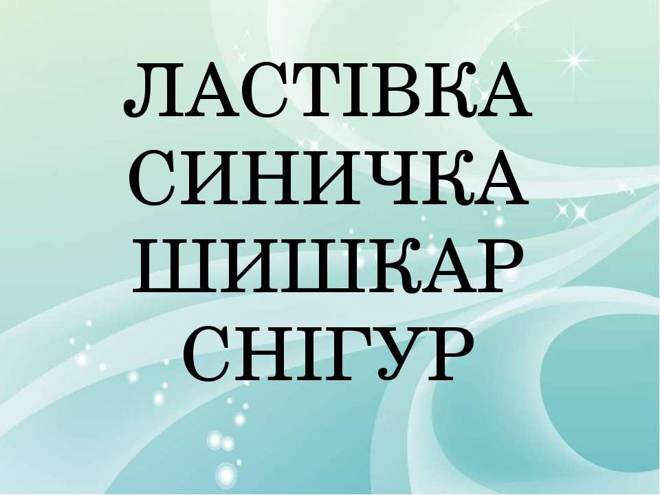 ЛАСТІВКА СИНИЧКА ШИШКАР СНІГУР