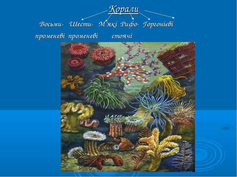 Корали Восьми- Шести- М'які Рифо- Горгонієві променеві променеві стоячі
