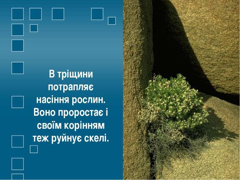 В тріщини потрапляє насіння рослин. Воно проростає і своїм корінням теж руйну...