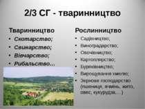 2/3 СГ - тваринництво Тваринництво Скотарство; Свинарство; Вівчарство; Рибаль...