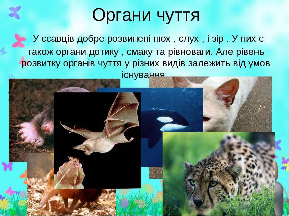 органи дотику у ссавців