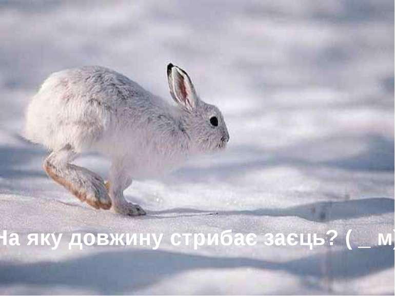 На яку довжину стрибає заєць? ( _ м) 5 запитань, які стосуються статистики...