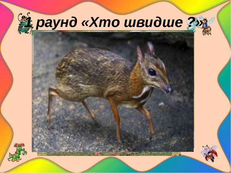 1 раунд «Хто швидше ?» 3 малюнки тварин: звір, птах, комаха На швидкість. ...