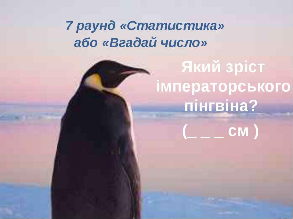 7 раунд «Статистика» або «Вгадай число»  Який зріст імператорського пінгв...