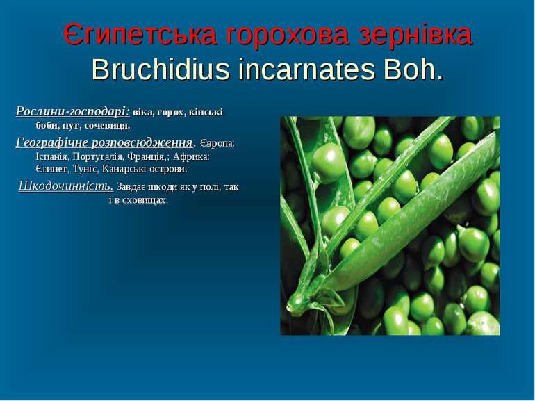 Єгипетська горохова зернівка Bruchidius incarnates Boh. Рослини-господарі: ві...
