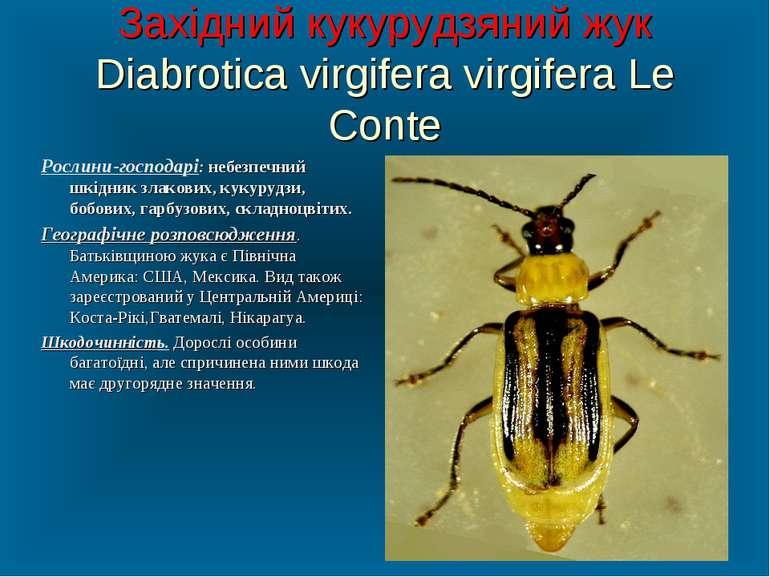 Західний кукурудзяний жук Diabrotica virgifera virgifera Le Conte Рослини-гос...