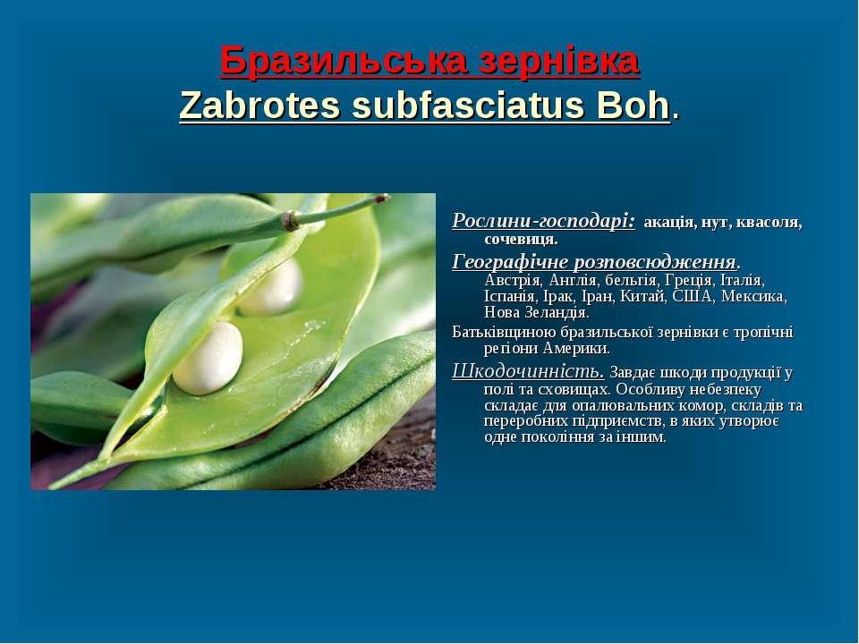 Бразильська зернівка Zabrotes subfasciatus Boh. Рослини-господарі: акація, ну...