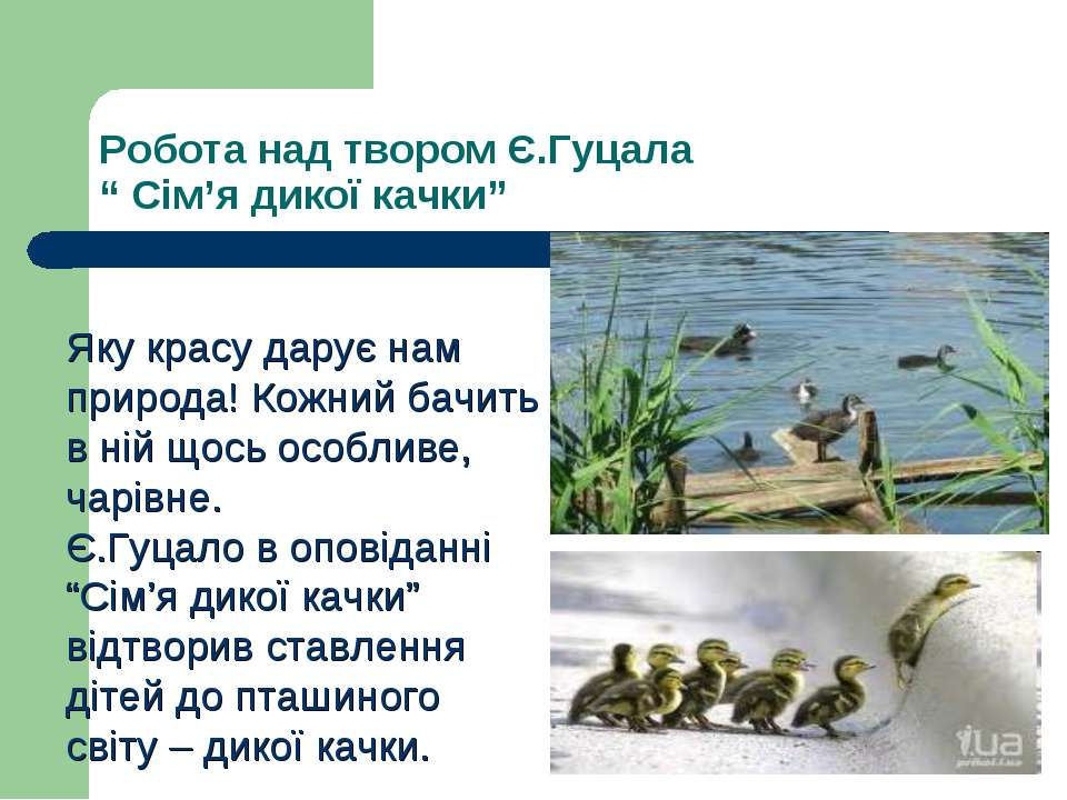 """Робота над твором Є.Гуцала """" Сім'я дикої качки"""" Яку красу дарує нам природа! ..."""