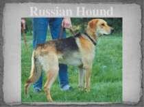 Russian Hound