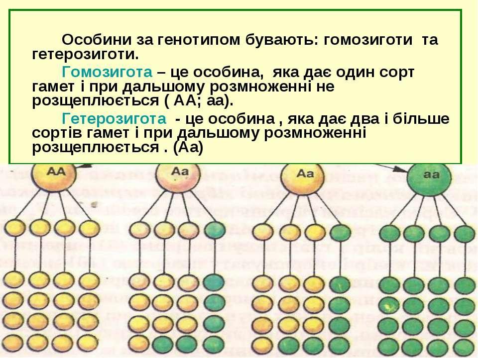 Особини за генотипом бувають: гомозиготи та гетерозиготи. Гомозигота – це осо...