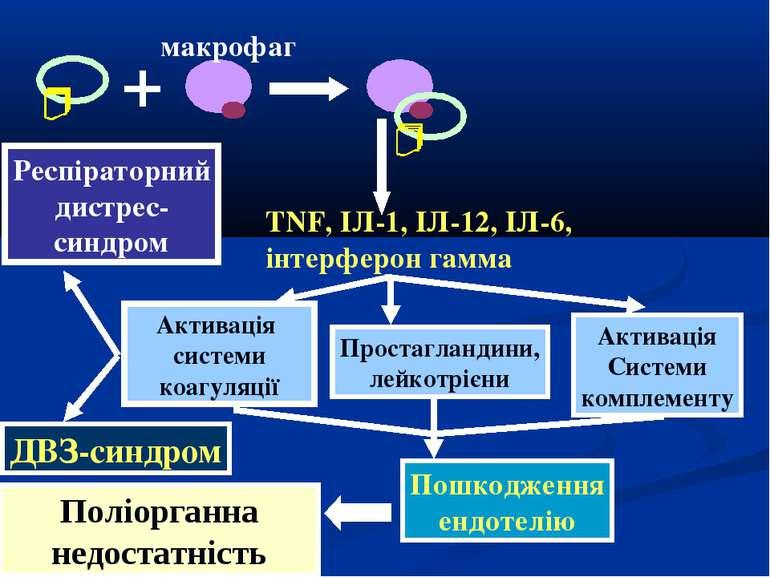 макрофаг TNF, ІЛ-1, ІЛ-12, ІЛ-6, інтерферон гамма Активація системи коагуляці...