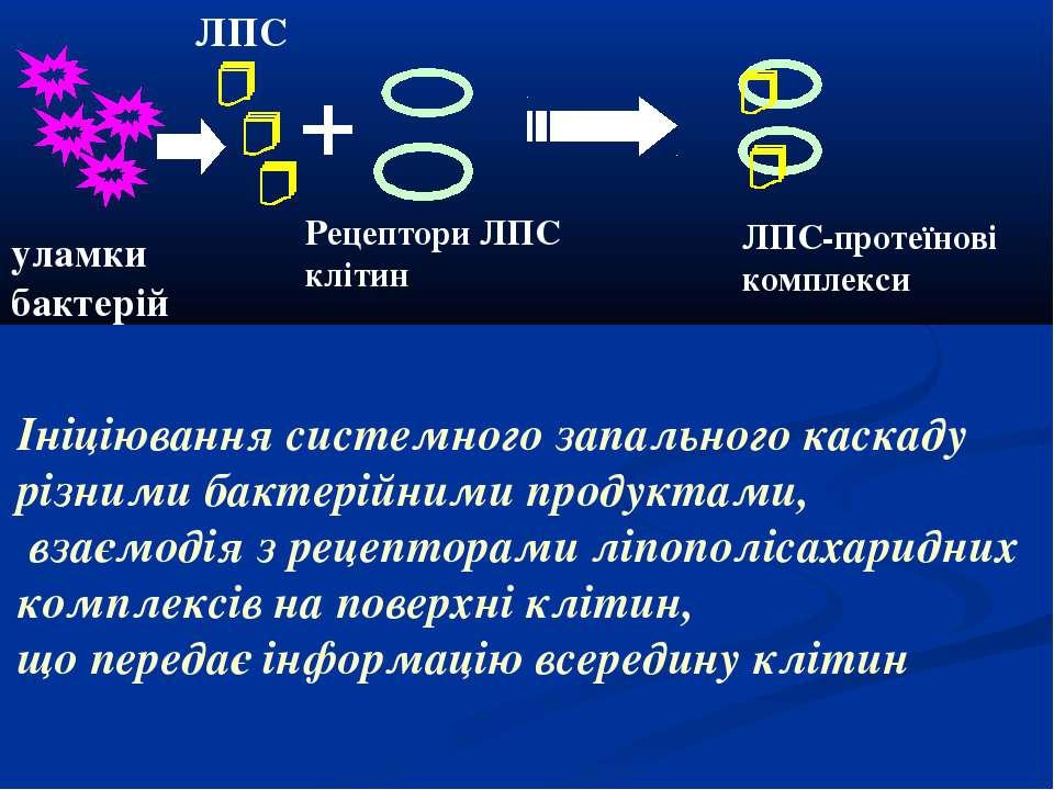 ЛПС уламки бактерій Рецептори ЛПС клітин ЛПС-протеїнові комплекси Ініціювання...
